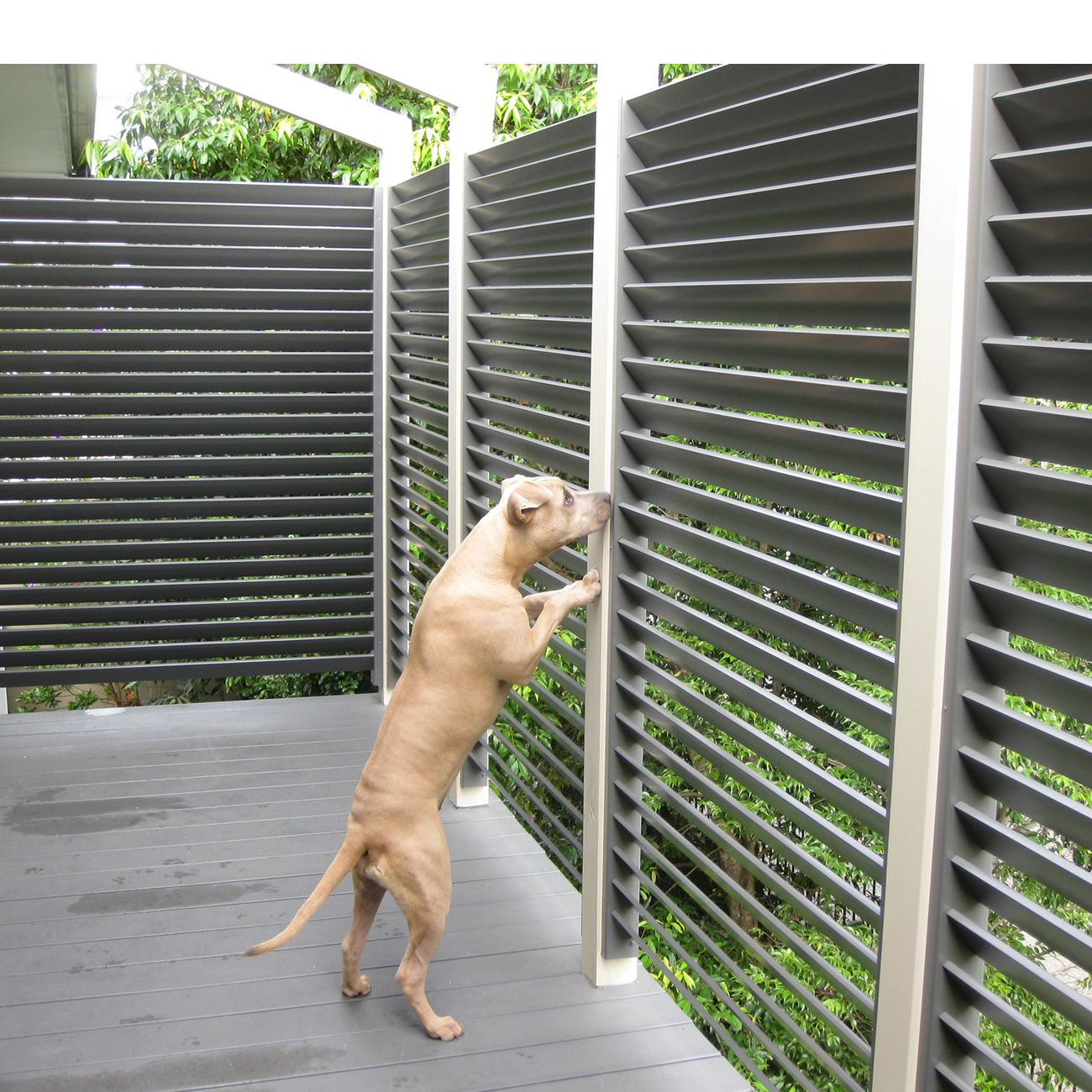 Louvred Privacy Screens
